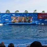 仙台うみの杜水族館、1周年記念のライブ・イルカショー、正面前方に座ったら周りがファンばかりで皆踊る https://t.co/lgiw6hBouD