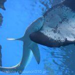 仙台うみの杜水族館、ヨシキリザメ https://t.co/grfIl1ESy5