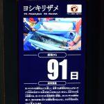 仙台うみの杜水族館、ヨシキリザメ。91日目。ミヤギテレビのヨシキリザメ特集を見たけど、水槽越しではわからない青い肌の美しさがよくわかった。 https://t.co/BQVuHny6RY