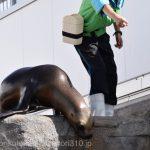 仙台うみの杜水族館、オタリアさん https://t.co/PoE1VlWfbI