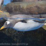 仙台うみの杜水族館、ペンギンさん https://t.co/s4sYMrYR9m