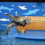 仙台うみの杜水族館、バンドウイルカのイルカショー https://t.co/DBUPizBh1y