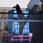 仙台うみの杜水族館、オタリアさんのダイビング練習 https://t.co/nJXLRsIiWe