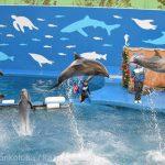 仙台うみの杜水族館、バンドウイルカのイルカショー #s_uminomori https://t.co/07d4PZUxc5