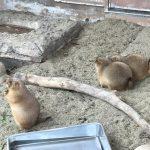 動物園で水族館常連さんに出会うとか https://t.co/vpDazkXg2i