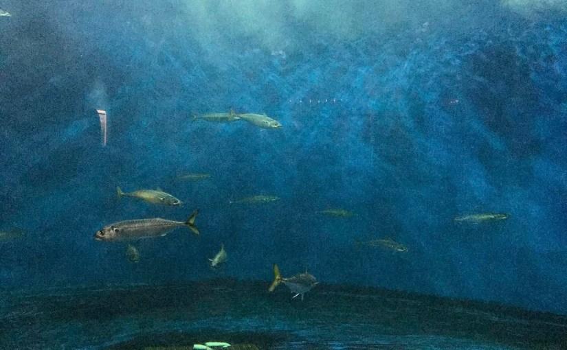 #仙台うみの杜水族館 #ヨシキリザメ #iPhone7Plus