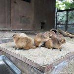 仙台市八木山動物公園、オグロプレーリードッグさん https://t.co/t2z60qS83C