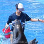 仙台うみの杜水族館、ドルフィン・スプラッシュ(アシカスプラッシュ?) トレーナーさんの方が楽しんでそうな素敵な笑顔 #s_uminomori https://t.co/ncd93hfUZR