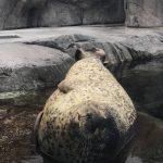仙台うみの杜水族館 奥行きを感じるゴマフアザラシさん https://t.co/7mhQjGX3MQ