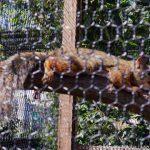 仙台うみの杜水族館 ニホンリス 同じ距離にある小枝のフォーカス合わせてから撮影 https://t.co/aGVG1ncwWZ