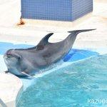 #バンドウイルカ #須磨海浜水族園 #nikonD5300