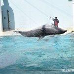 #須磨海浜水族園 #バンドウイルカ #イルカショー #nikonD5300