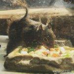 #ニホンリス #ご飯動画 #仙台うみの杜水族館 #iPhone7Plus