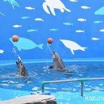 #バンドウイルカ #仙台うみの杜水族館 #バスケ好き
