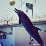 #バンドウイルカ #イルカショー #仙台うみの杜水族館 #nikonD5300 出口はあちらです。
