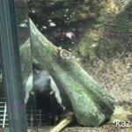 #ツメナシカワウソ #仙台うみの杜水族館 #iPhone7Plus 木で遊ぶツメナシカワウソさん