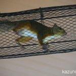 #ニホンリス #仙台うみの杜水族館 #nikonD5300