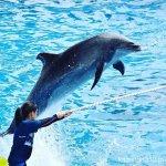 #バンドウイルカ #ハードルジャンプ #仙台うみの杜水族館 #nikonD5300
