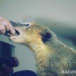 #アカハナグマ #仙台うみの杜水族館 #nikonD5300 気づかない人が多そう