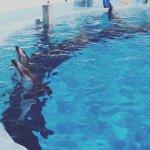 #カマイルカ #カエルの歌 #マリンワールド海の中道 #iPhone7Plus