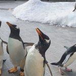 #ペンギンパレード #仙台うみの杜水族館 #iPhone7Plus
