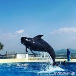 #クジラ #マリーンワールド海の中道 #iPhone7Plus