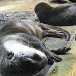 #ツメナシカワウソ #仙台うみの杜水族館 #iPhone7Plus