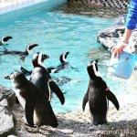#世界ペンギンの日 #マリンワールド海の中道 #nikonD5300