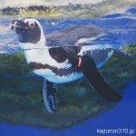 #世界ペンギンデー #仙台うみの杜水族館 #nikonD5300