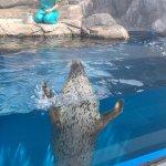#ゴマフアザラシ #仙台うみの杜水族館 #iPhone7Plus
