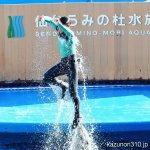 #バンドウイルカ #仙台うみの杜水族館 #nikonD5300 #マトリックス のあれです。トリニティーのあれです。