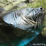#バイカルアザラシ #仙台うみの杜水族館 #iPhone7Plus