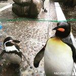 #ペンギン #仙台うみの杜水族館 #iPhone7Plus