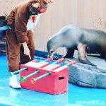 #カリフォルニアアシカ #仙台うみの杜水族館 #nikonD5300