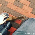 #ニホンリス #仙台うみの杜水族館 #iPhone7Plus