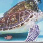 #アオウミガメ #仙台うみの杜水族館 #nikonD5300
