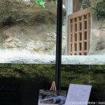 #メガネカイマン #仙台うみの杜水族館 #iPhone7Plus これからも空から仙台うみの杜水族館を見守ってください。