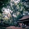 ひさびさのこまつカメラ部で秘境の鹿島の森で撮影会しました☆