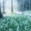 シャガの花が群生する小松・遊泉寺銅山跡&ポートレート