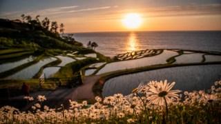 田植え直後の美しい輪島・白米千枚田と夕日