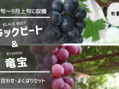 種無しブラックビート・種あり竜宝セット 34