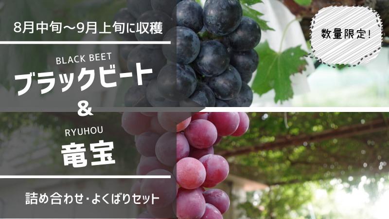 種無しブラックビート・種あり竜宝セット 72