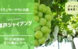 【種無し・皮ごとブドウ】瀬戸ジャイアンツ 37