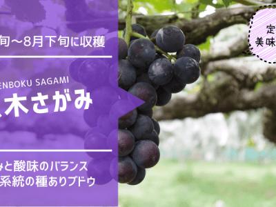 原木さがみ【種ありブドウ】 34