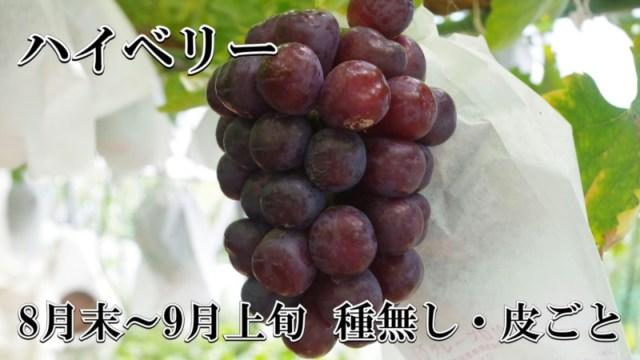 ブドウ ハイベリー 種無し皮ごと