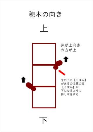 【ブドウの接ぎ木時期】ブドウの接ぎ木方法や台木についてを画像で解説 317