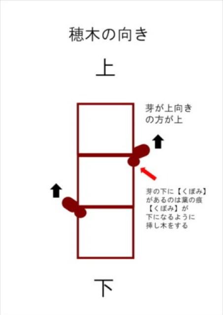 【ブドウの接ぎ木の手順】接ぎ木鋏を使ったブドウの接ぎ木方法を画像で解説 177