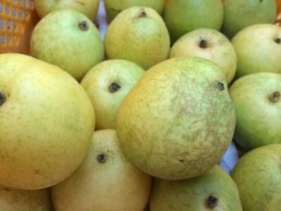 八里の収穫 梨 66