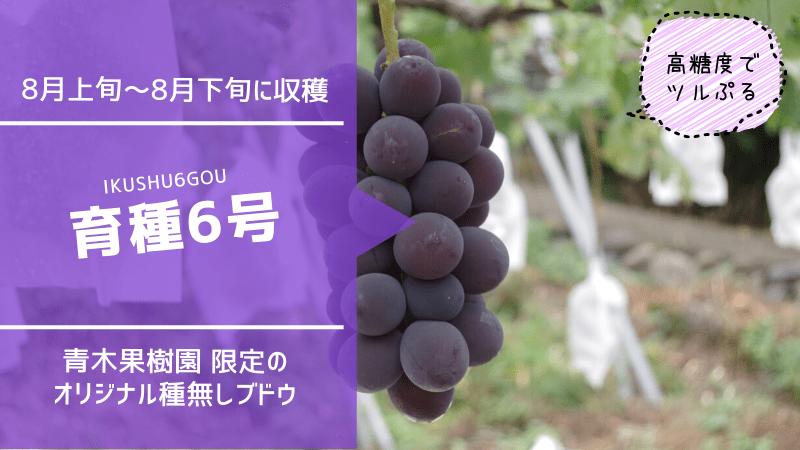 育種6号【種無しブドウ】 70