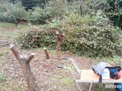 桃畑の拡張のために伐採だ!趣味の植物はいけないと実感。 34